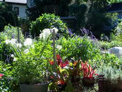 Beautiful Permaculture Plant Guild