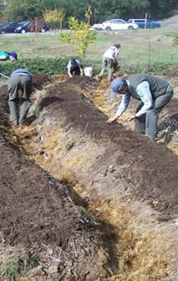 Digging Permaculture Swales