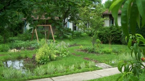 Permaculture Front Yard