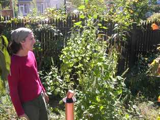 Laurie's Permaculture Yard