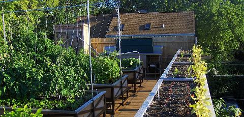 Uncommon Ground City Rooftop Farming