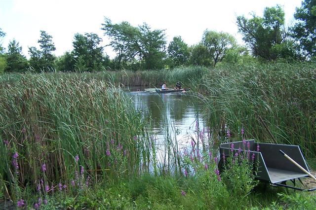 Stelle Pond