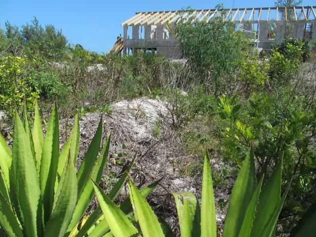 Eleuthera Island School - Bahamas (13)