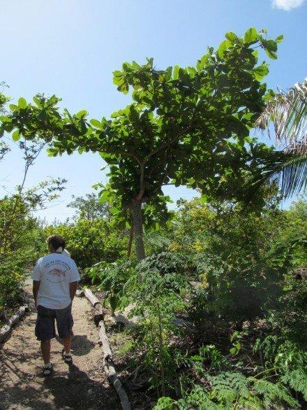 Eleuthera Island School - Bahamas (16)