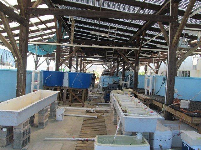 Eleuthera Island School - Bahamas (8)